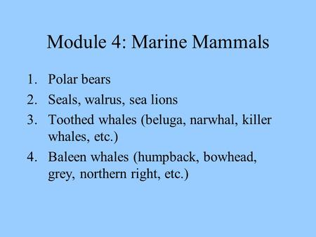 Module 4: Marine Mammals 1.Polar bears 2.Seals, walrus, sea lions 3.Toothed whales (beluga, narwhal, killer whales, etc.) 4.Baleen whales (humpback, bowhead,