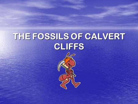 THE FOSSILS OF CALVERT CLIFFS Where is Calvert Cliffs? Calvert Cliffs is located on the Eastern Shore of Maryland in Calvert County.