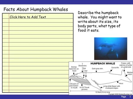 Page1 Facts About Humpback Whales Click Here to Add Text Describe the humpback whale. You might want to write about its size, its body parts, what type.