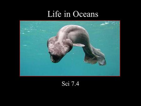 Life in Oceans Sci 7.4 Plankton: drift with current includes smallest organisms many are single celled.