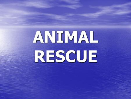 ANIMAL RESCUE. VOCABULARY RESCUED saved from danger I rescued a dog that was caught in a trap.
