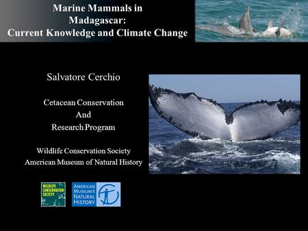 Marine Mammals in Madagascar: Current Knowledge and Climate Change Salvatore Cerchio Cetacean Conservation And Research Program Wildlife Conservation Society.