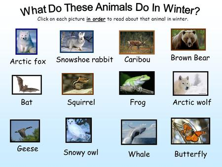 Arctic fox Snowshoe rabbit Caribou Brown Bear BatSquirrelFrogArctic wolf Geese Whale Snowy owl Butterfly Click on each picture in order to read about that.