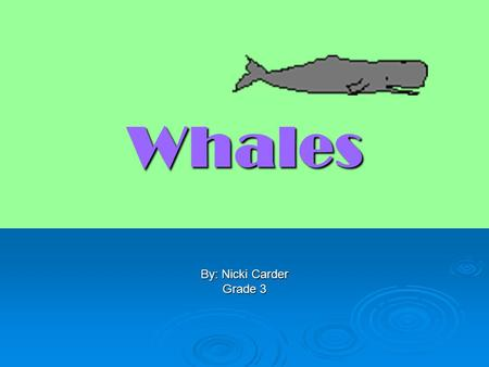 Whales By: Nicki Carder Grade 3. What is a Whale?  A whale is a large, magnificent, intelligent mammal.  Whales have special made bodies just for them.