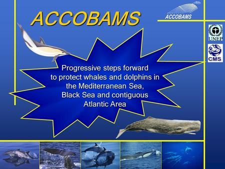 ACCOBAMS Progressive steps forward to protect whales and dolphins in the Mediterranean Sea, Black Sea and contiguous Atlantic Area.