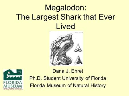Megalodon: The Largest Shark that Ever Lived Dana J. Ehret Ph.D. Student University of Florida Florida Museum of Natural History.