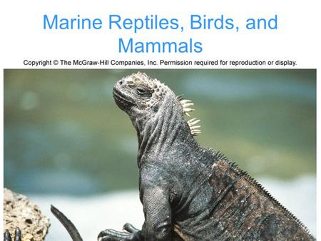 Transitions of reptiles to mammals