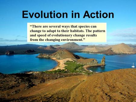 Evolution in Action. What is a Species? Morphological definition – a species is defined by its structure and appearance Biological definition – a species.