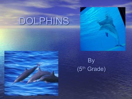 DOLPHINS By (5 th Grade) By (5 th Grade) BiomeBiome Dolphins live in the Aquatic Biome. This biome can be broken down into two basic regions: Freshwater.