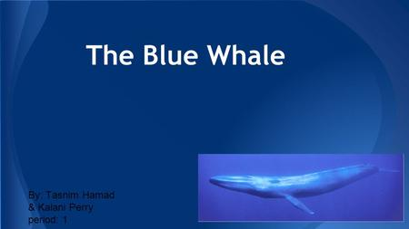 The Blue Whale By: Tasnim Hamad & Kalani Perry period: 1.