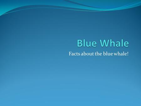 Facts about the blue whale!. The blue whale is a marine mammal belonging to the baleen whales. At 30 meters in length and 170 tones or more in weight.