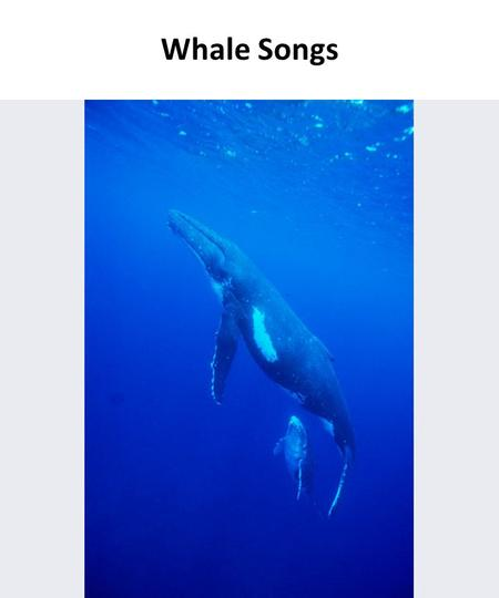 Whale Songs. Humpback whale song, wavelet graph These images are visual representations of songs sung by whales and dolphins.
