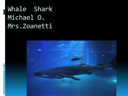 Whale Shark Michael O. Mrs.Zoanetti Appearance  It has white spots  They are thick blooded  They can be found in million groups  They prefer warm.