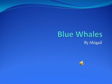 By Abigail Physical Characteristics Average weight 130-150 tons Baleen whales.