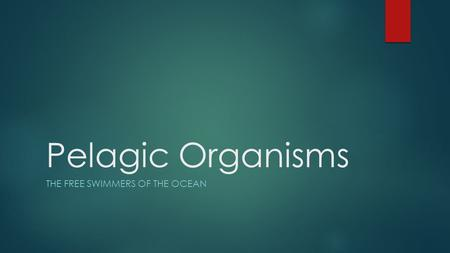 Pelagic Organisms THE FREE SWIMMERS OF THE OCEAN.