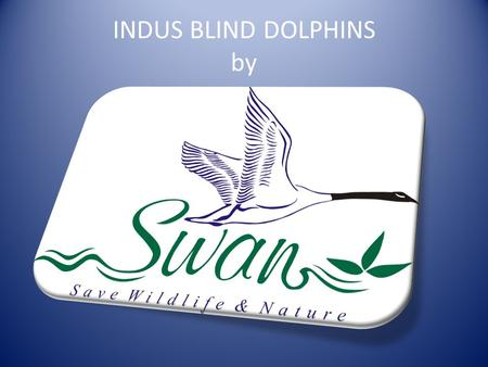 INDUS BLIND DOLPHINS by. Blind river dolphins Cetacean.