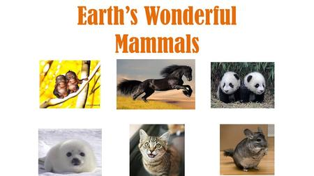 Earth's Wonderful Mammals