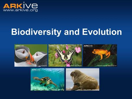 Biodiversity and Evolution. What is biodiversity? Biological diversity The simple version - number of different species in a given area  Species richness.