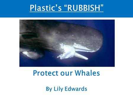 "Plastic's ""RUBBISH"" Protect our Whales By Lily Edwards."