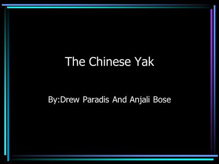 The Chinese Yak By:Drew Paradis And Anjali Bose Features of the Yak Yaks are are long,large haired mammals They can grow up to 3 to 6 feet tall They.