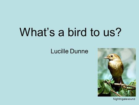 What's a bird to us? Lucille Dunne Nightingale sound.