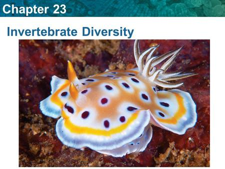 Chapter 23 Invertebrate Diversity. 23.6 Echinoderms A. What are echinoderms? spiny-skinned animals with five- part radial symmetry, an internal skeleton,