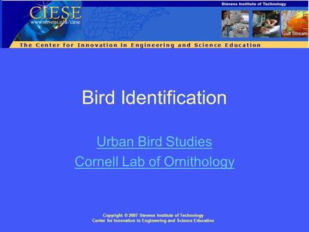 Copyright © 2007 Stevens Institute of Technology Center for Innovation in Engineering and Science Education Bird Identification Urban Bird Studies Cornell.