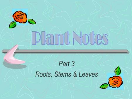 Part 3 Roots, Stems & Leaves Structure of Plants The structure of a plant contains a shoot system and a root system.