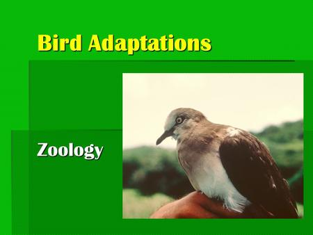 Bird Adaptations Zoology.