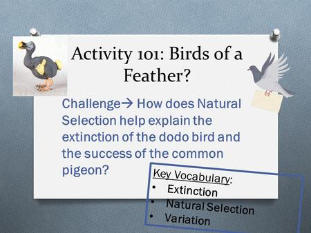 Activity 101: Birds of a Feather?