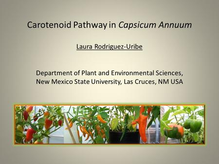 Carotenoid Pathway in Capsicum Annuum Laura Rodriguez-Uribe Department of Plant and Environmental Sciences, New Mexico State University, Las.
