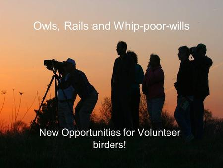 Owls, Rails and Whip-poor-wills New Opportunities for Volunteer birders!