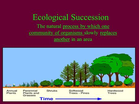 ecological succession a result of changes in the ecosystems Ecosystem succession:ecosystem succession: • results from the modification of physical environment byresults ecosystems and causes changes in resource.
