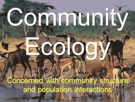 Concerned with community structure and population interactions