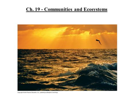 Ch. 19 - Communities and Ecosystems. How do organisms interact in a community? Properties of a community: Diversity - variety of different kinds of organisms.