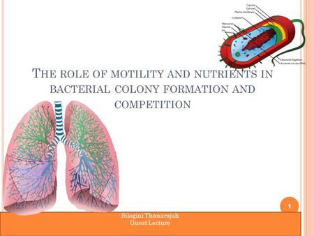 T HE ROLE OF MOTILITY AND NUTRIENTS IN BACTERIAL COLONY FORMATION AND COMPETITION 1 Silogini Thanarajah Guest Lecture.