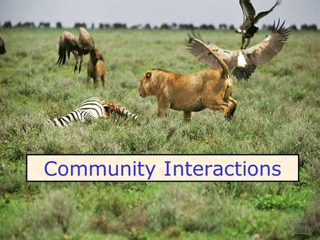 Community Interactions. Community – all the species in a given location at a given time Habitat the physical environment they live in : Redwood forest.