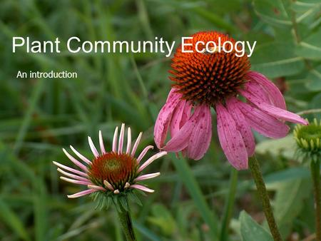 Plant Community Ecology An introduction. Ecology as a Science  Study of the relationships between living organisms and their environment  Of the interactions.
