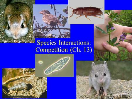 Species Interactions: Competition (Ch. 13). Competition (Ch. 13) Definition: –Individuals attempt to gain more resource in limiting supply –(-,-) interaction: