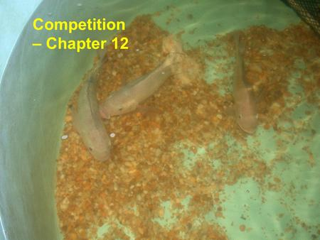 Competition – Chapter 12. Competition Resource competition – occurs when a number of organisms utilize common resources that are in short supply. Interference.