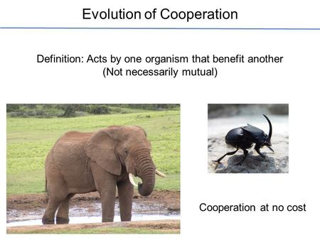 Evolution of Cooperation Definition: Acts by one organism that benefit another (Not necessarily mutual) Cooperation at no cost.