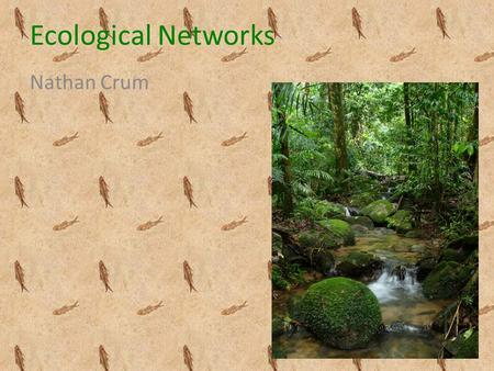Ecological Networks Nathan Crum. Ecology Study of the interactions between organisms and their environment Study of ecosystems – Ecosystem- web/network.