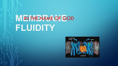 MEMBRANE FLUIDITY IN THE NAME OF GOD. IN BIOLOGY, MEMBRANE FLUIDITY REFERS TO THE VISCOSITY OF THE LIPID LAYER OF A CELL MEMBRANE OR A SYNTHETIC LIPID.