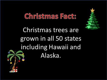 Christmas trees are grown in all 50 states including Hawaii and Alaska.