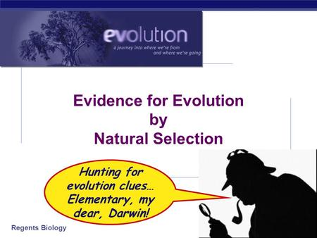 Regents Biology 2006-2007 Evidence for Evolution by Natural Selection Hunting for evolution clues… Elementary, my dear, Darwin!