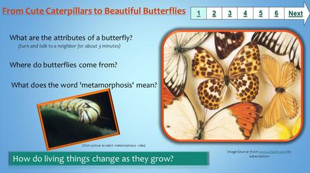 What are the attributes of a butterfly? (turn and talk to a neighbor for about 3 minutes) Where do butterflies come from? What does the word 'metamorphosis'