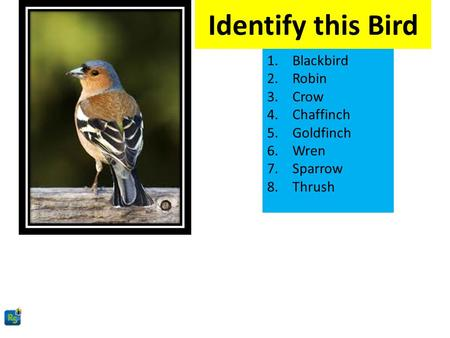 Identify this Bird 1.Blackbird 2.Robin 3.Crow 4.Chaffinch 5.Goldfinch 6.Wren 7.Sparrow 8.Thrush.