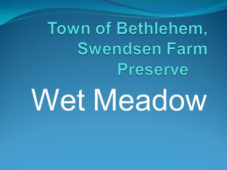 Wet Meadow. Southerly View of Wet Meadow Trail-Head $25,000 grant used to install bridges, boardwalks and signage.