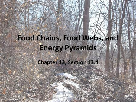 Food Chains, Food Webs, and Energy Pyramids Chapter 13, Section 13.4.