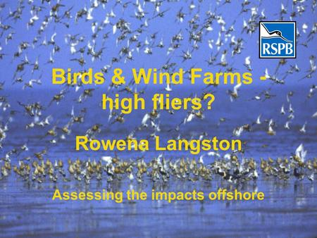 Birds & Wind Farms - high fliers? Rowena Langston Assessing the impacts offshore.